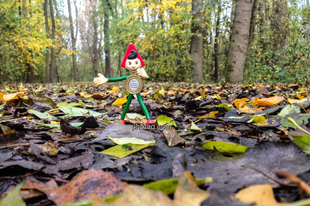 Sparefroh im Wald, Herbst, Laub, © Martina Draper (26.10.2013)