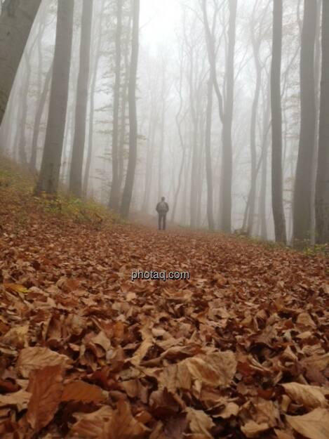 Wald, Nebel, Spaziergänger, Laub, Boden, Herbst, © teilweise www.shutterstock.com (02.11.2013)