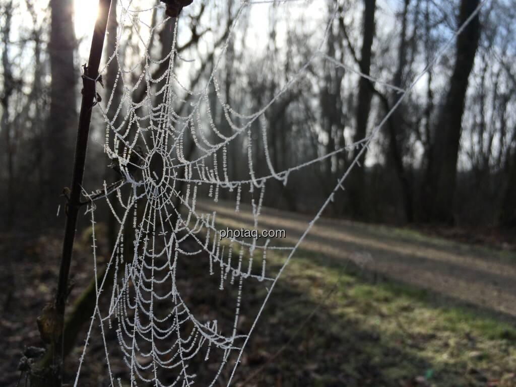 Spinnennetz, Frost (13.01.2014)