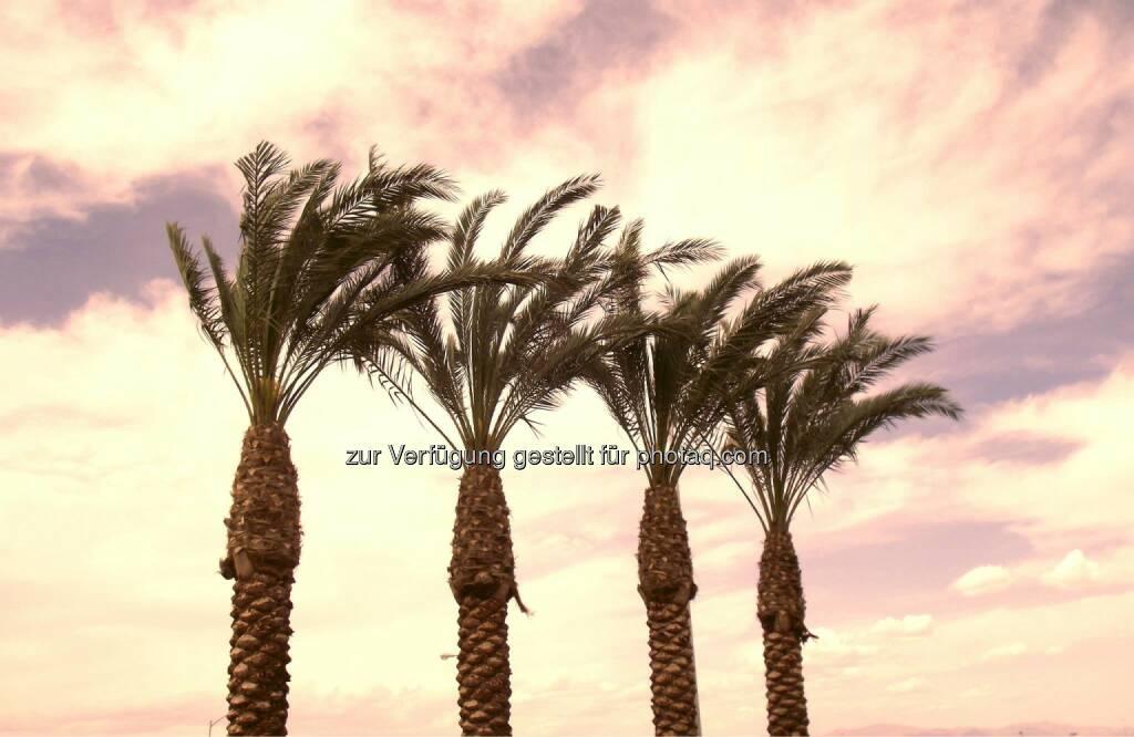 Palm Trees at Sunset, Palmen (2011) , © Dietmar Scherf (17.02.2014)