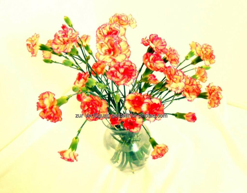 Carnations (2013), © Dietmar Scherf (17.02.2014)