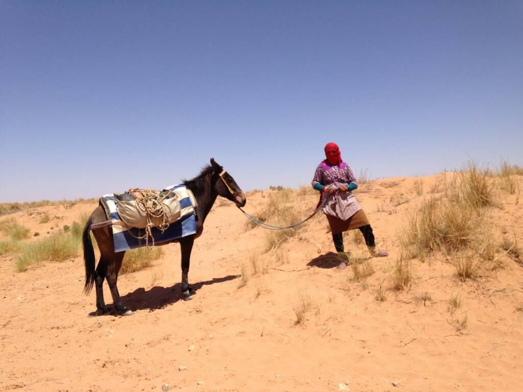 Pferd (03.05.2014)