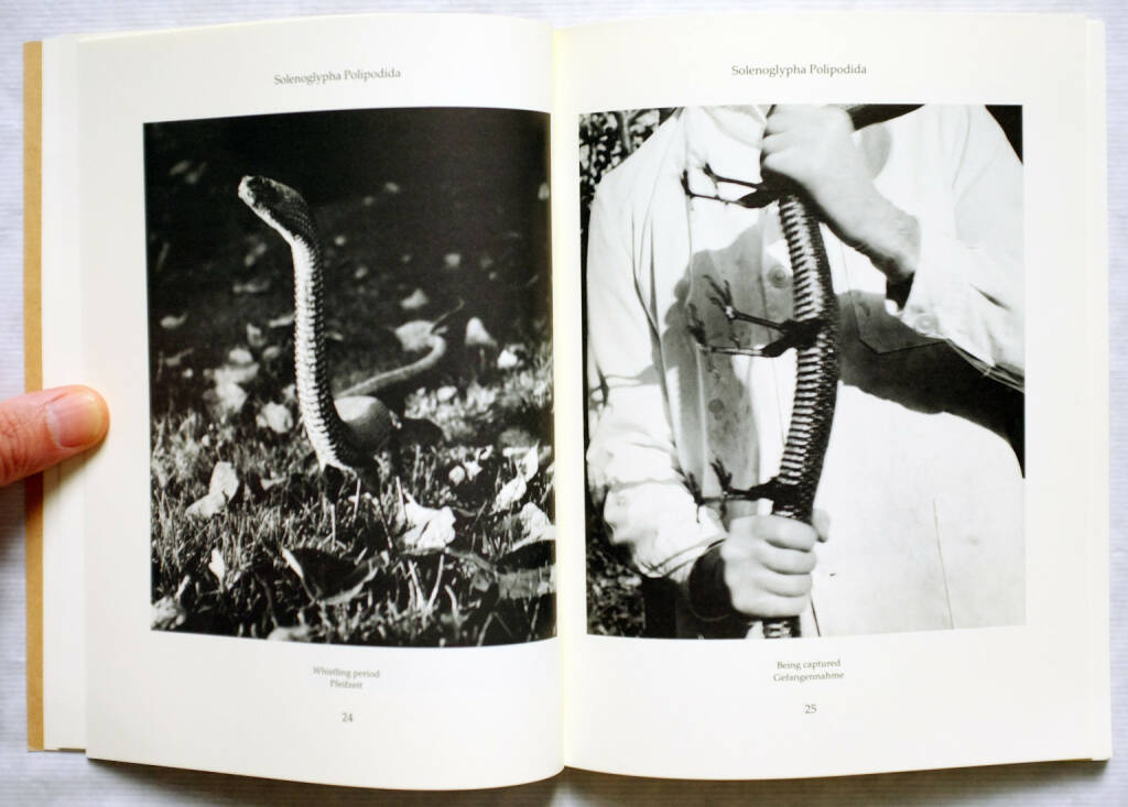 Sample spread of Joan Fontcuberta and Pere Formiguera - Dr. Ameisenhaufen's Fauna, 250-300 Euro, http://josefchladek.com/book/joan_fontcuberta_and_pere_formiguera_-_dr_ameisenhaufens_fauna (10.08.2014)