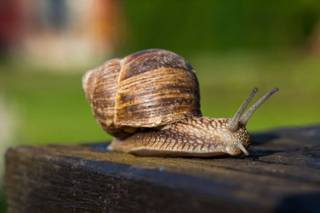 Schnecke, langsam, http://www.shutterstock.com/de/pic-144765469/stock-photo-snail-on-the-table.html, © www.shutterstock.com (17.01.2018)