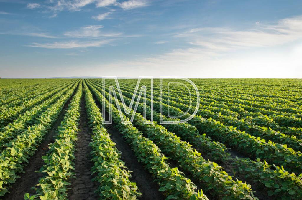 Soja, Sobabohnen, Feld, Landwirtschaft, Boden, Ernte, http://www.shutterstock.com/de/pic-145838192/stock-photo-soybean-field-rows-in-summer.html, © teilweise www.shutterstock.com (03.12.2014)