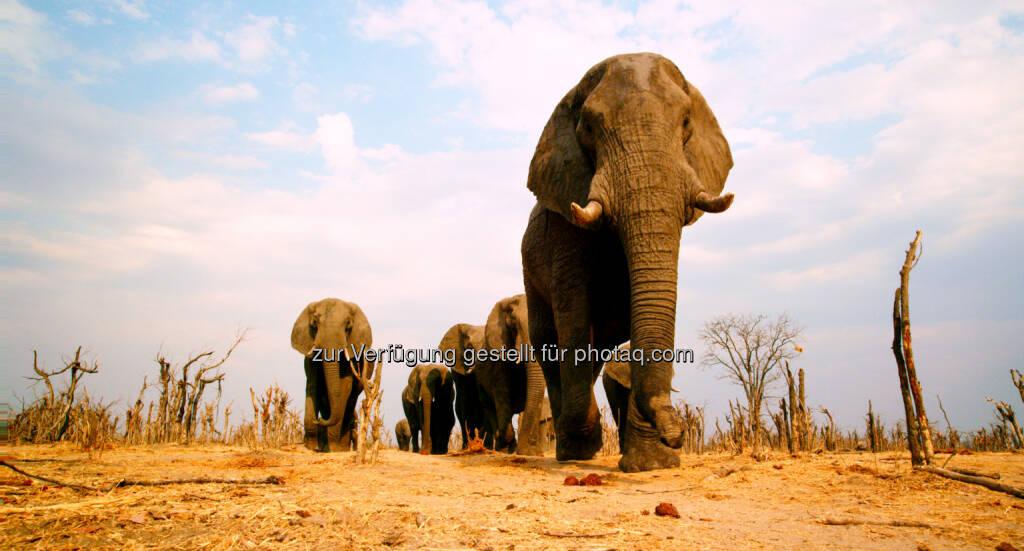 Constantin Film: Afrika - Das Magische Königreich - ab 5.3.2015 im Kino, Elefanten, © Aussendung (15.12.2014)