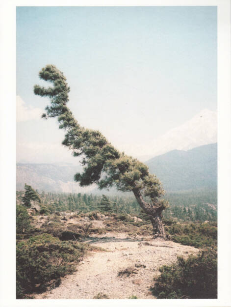 Vincent Delbrouck - Some Windy Trees, Self published/Wilderness 2013, Cover - http://josefchladek.com/book/vincent_delbrouck_-_some_windy_trees, © (c) josefchladek.com (29.03.2015)
