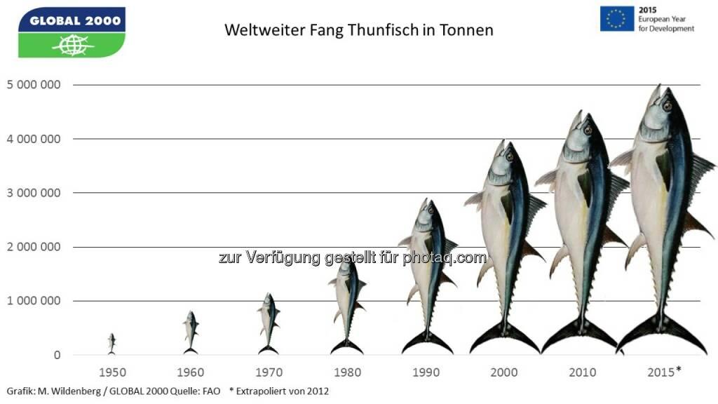 Global 2000 und Südwind: Soziales Elend und Überfischung in Thunfisch-Dosen europäischer Supermärkte, © Aussender (02.06.2015)