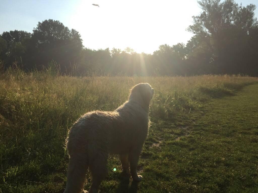 Hund, Sonne, Gegenlicht (03.07.2015)