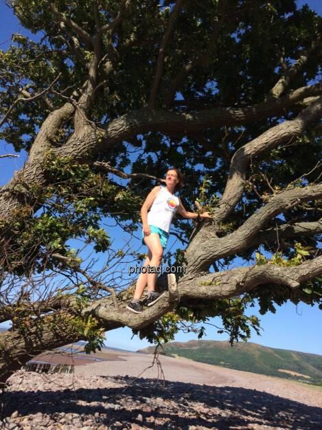Baum, © Martina Draper (19.07.2015)