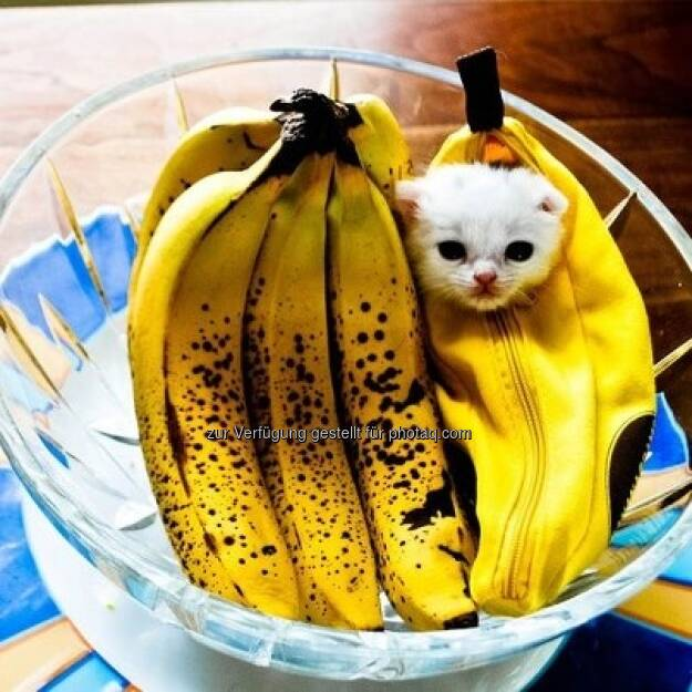 Bananing Kitty https://www.facebook.com/bananingofficial (22.03.2013)