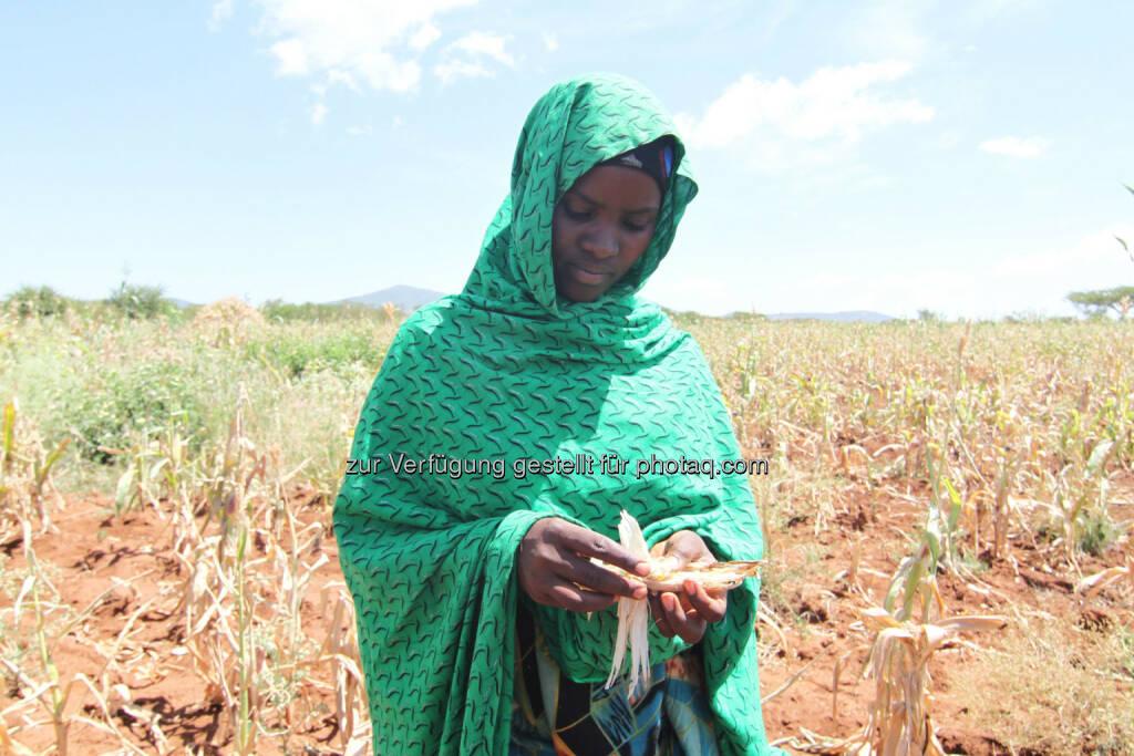 Äthiopische Bäuerin vor ihrem vertrockneten Maisfeld, in der Hand einen verkümmerten Maiskolben der kaum Körner trägt : Äthiopien: 8,2 Millionen Menschen von Hunger bedroht : UNO-Bericht: Schlimmste Dürre seit 30 Jahren : Fotocredit: Menschen für Menschen, © Aussender (28.10.2015)
