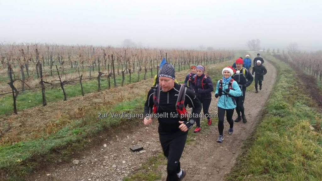 Omotion Family Lauf, Anninger, bergauf, Weingarten, © Michael Lagler (09.12.2015)