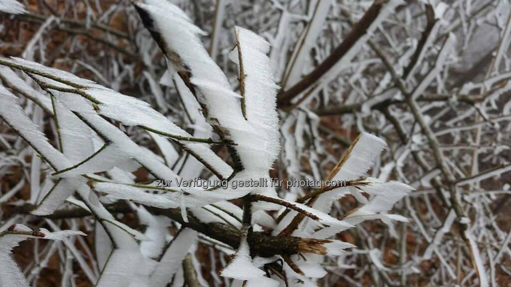 Eis, gefroren, Kälte, kalt, © Michael Lagler (09.12.2015)