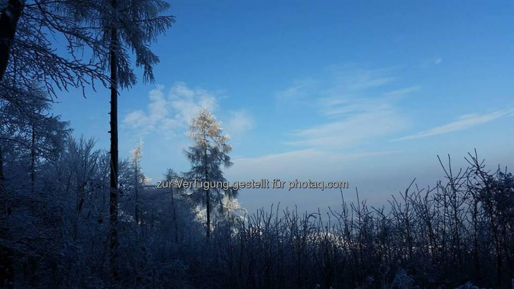Baum, Schnee, © Michael Lagler (05.01.2016)