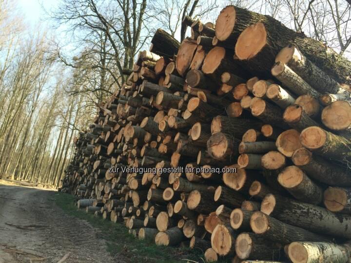 Holz, Holzstapel
