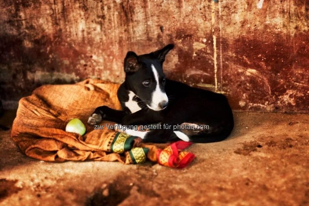 Hund, Indien by http://www.florap.com  (13.04.2013)