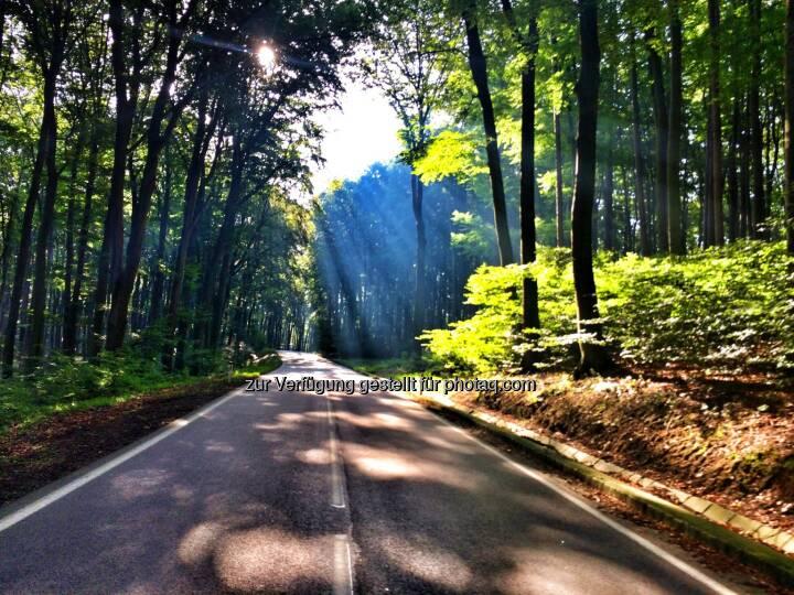 Wald, Straße, Weg, Sonne
