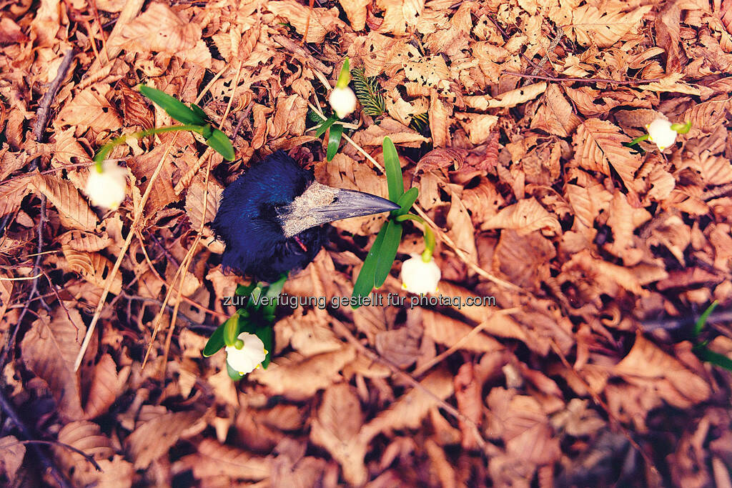Maiglöckchengrab, by Detlef Löffler, http://loefflerpix.com/ (26.04.2013)