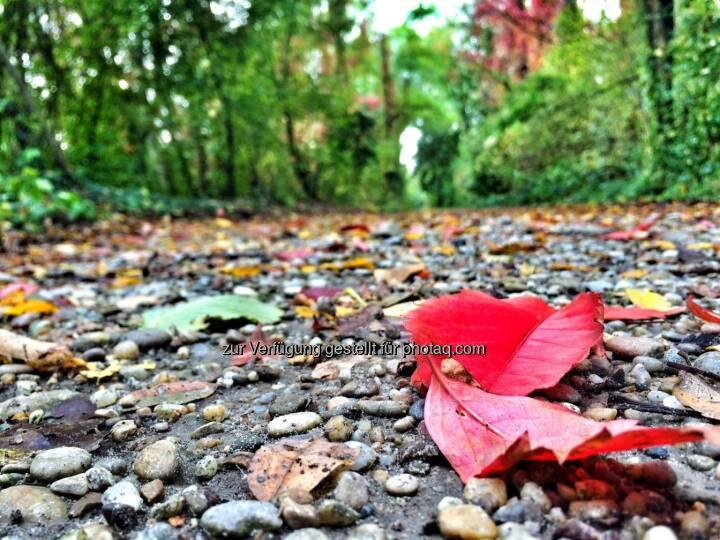 Herbst, Blatt, Wald