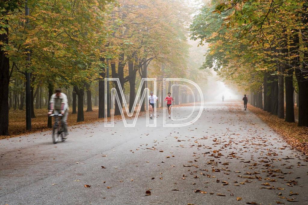 Hauptallee im Herbst, Wien, © Martina Draper (15.12.2012)