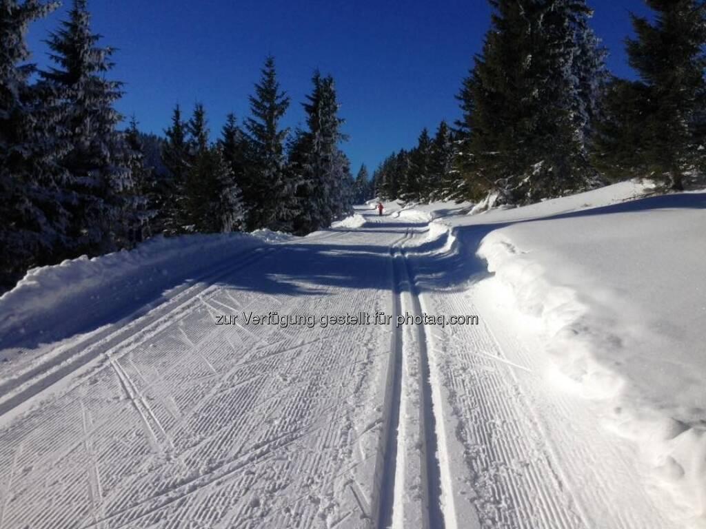 Spur Langlaufen Loipe (22.01.2017)