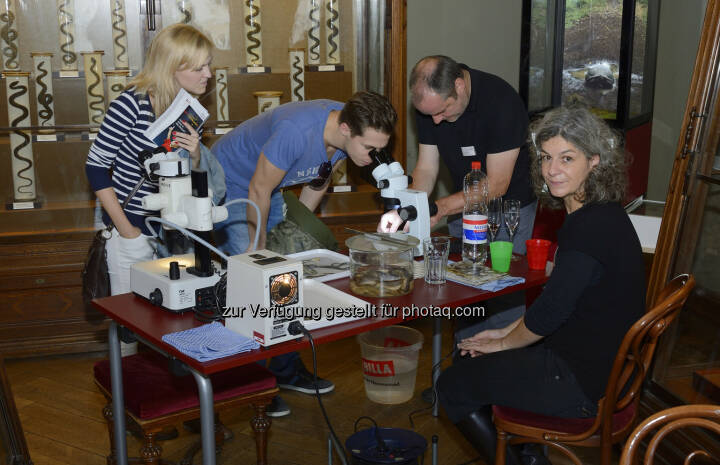 Naturhistorisches Museum: Citizen Science Day am 4. März 2017 im NHM Wien (Fotocredit: NHM Wien, Kurt Kracher)