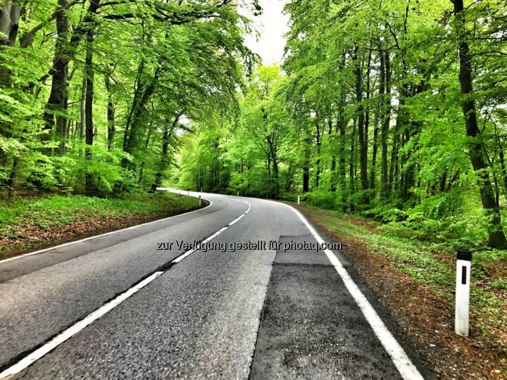 Straße, Wald
