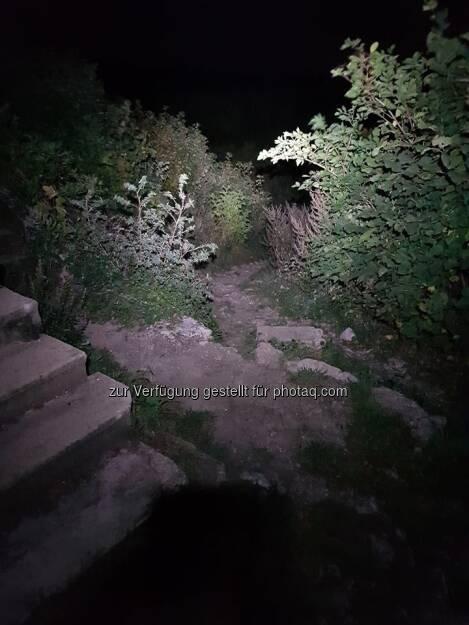 Nachts im Wald (01.10.2017)