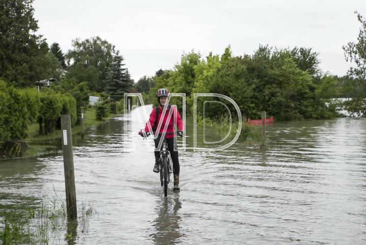 Hochwasser, Greifenstein, Martina Draper