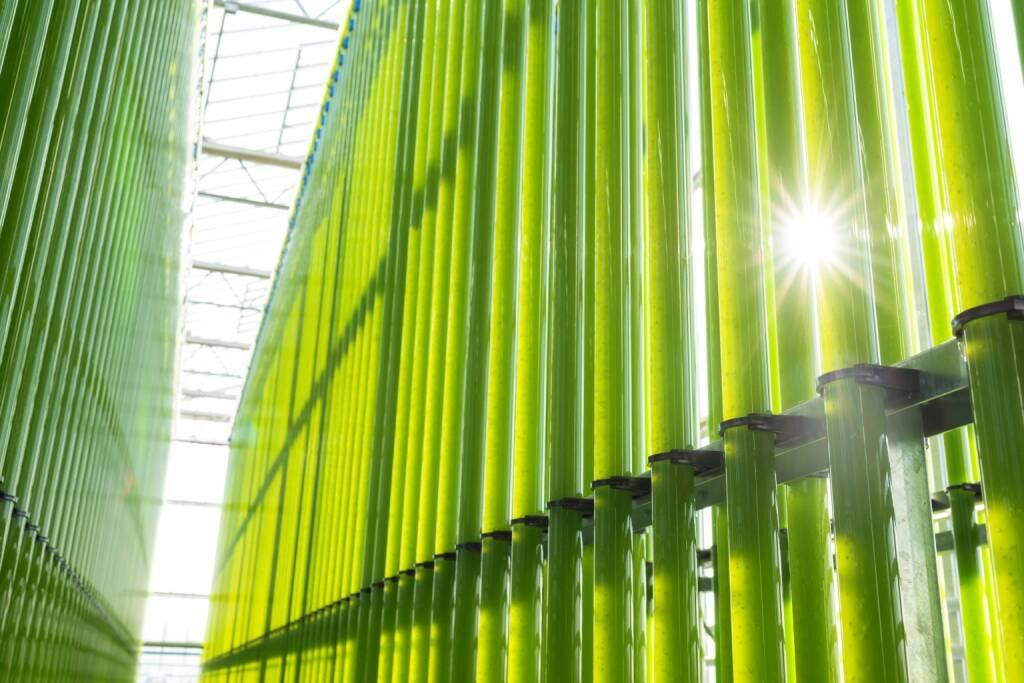 Einen zukunftweisenden Schritt setzte heute die eparella GmbH, eine Tochter der ecoduna AG, bei der Mikroalgenproduktion im industriellen Maßstab. Nach erfolgreichen Jahren der Forschung und Entwicklung ist nun, nach 11 Monaten Bauzeit, auf einer Fläche von über 10.000m2 eines der weltweit größten Mikroalgen-Wachstumssysteme entstanden. Insgesamt soll nach dem Vollausbau - im Jahr 2021 - eine Kapazität von bis zu 300t Biomasse generiert werden; in der derzeitigen Ausbaustufe sind es jährlich 100t trockene Algenbiomasse. Die Baukosten betrugen 18 Mio. Euro. Bild: ecoduna, © Aussendung (22.03.2018)