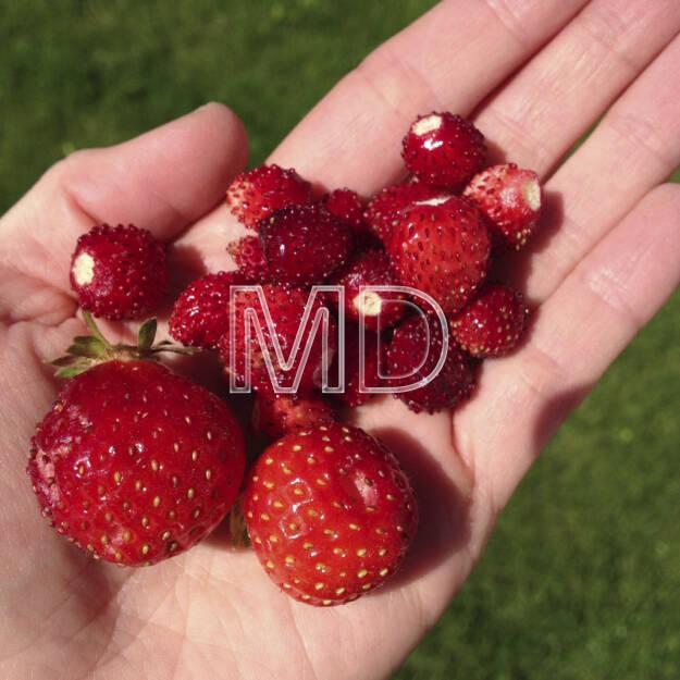 Erdbeeren, © www.martina-draper.at (08.07.2013)