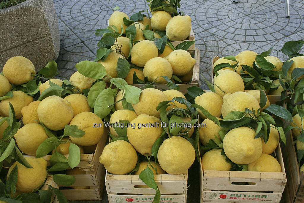 Zitronen, © Gabriele Hartweger (15.07.2013)