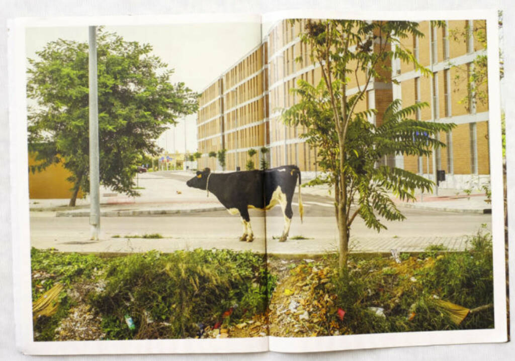 Kuh, Spanien 2012, The Pigs, (c) Carlos Spottorno (Phree und RM Verlag) (19.08.2013)